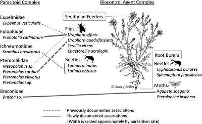 conceptual figure showing relationship between parasitoid complex and biocontrol agent complex