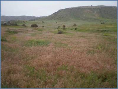 Image of a landscape showing signs of cheat grass suppression
