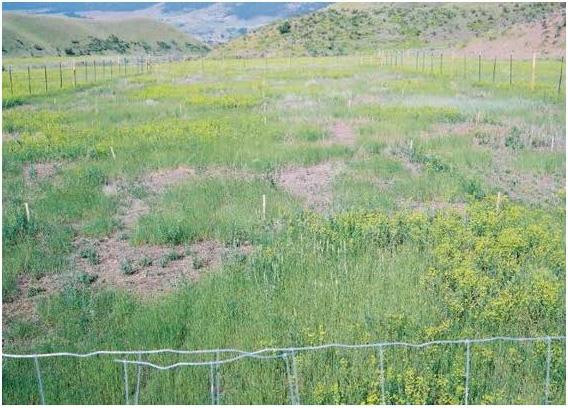 Figure 1: Photo of a field with patches of weeds and open ground