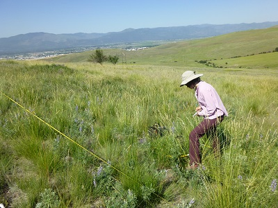 technician sampling percent cover on a hillside rangeland with mountains in the background