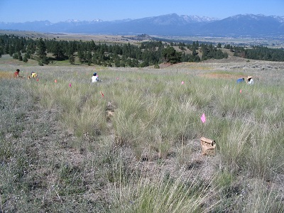 people sampling a revegetation site with mountains in background