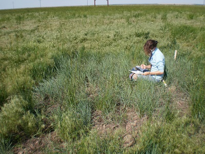 person sitting in plot with seeded grass growing and cheatgrass growing around the plot