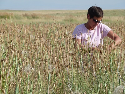 person sitting in field of western salsify that is dispersing seeds